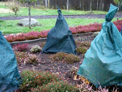 Taimede varjutamine kangaga